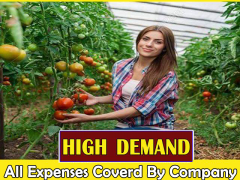 Tomato Farm Jobs New Zealand