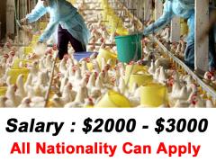 Poultry Farm Jobs in Australia