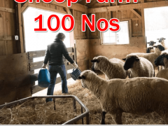 Sheep Farm Jobs in New Zealand