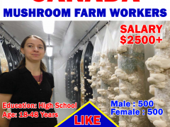 Mushroom Farm Worker in Canada