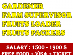 Farm Jobs in Australia