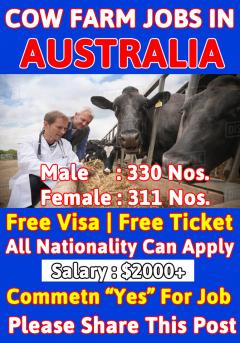 Dairy Farm Jobs in Australia