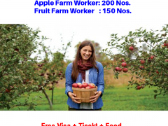 Apple picker in Canada for foreigner |2021|