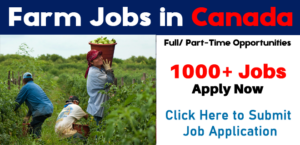 Pigs Farm Worker Jobs Canada