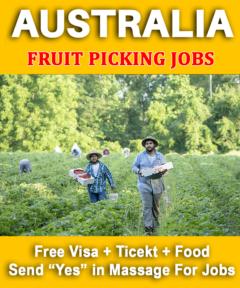 Fruit Picking Jobs Australia Salary