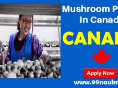 Mushroom Picker in Canada